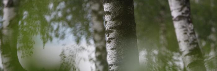 Header Bild: Grüne Bäume am Rande eines Waldes